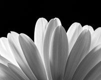 RCS-2006-02-26-Michigan-Grand-Rapids-Daisy-Petals-I-daisy-petals-I.jpg