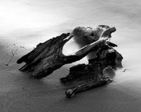 RCS-2006-06-08-Michigan-Traverse-City-Driftwood-driftwood.jpg