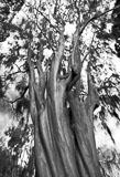 RCS-2007-01-27-South-Carolina-Beaufort-Twisted-Tree-_MG_6049-13x19-portfolio.jpg