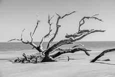 RCS-2019-02-05-Georgia-Jekyll-Island-Driftwood-Beach_5D4_17729.jpg