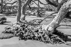 RCS-2019-02-05-Georgia-Jekyll-Island-Driftwood-Beach_5D4_17749.jpg