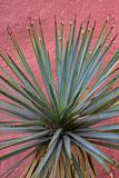 RCS-2008-07-20-New-Mexico-Madrid-Soapweed-Yucca-glauca-08-07-20__MG_9471-7.jpg