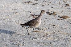 RCS-2015-04-12-Florida-Sanibel-Island-_5D_10119.jpg