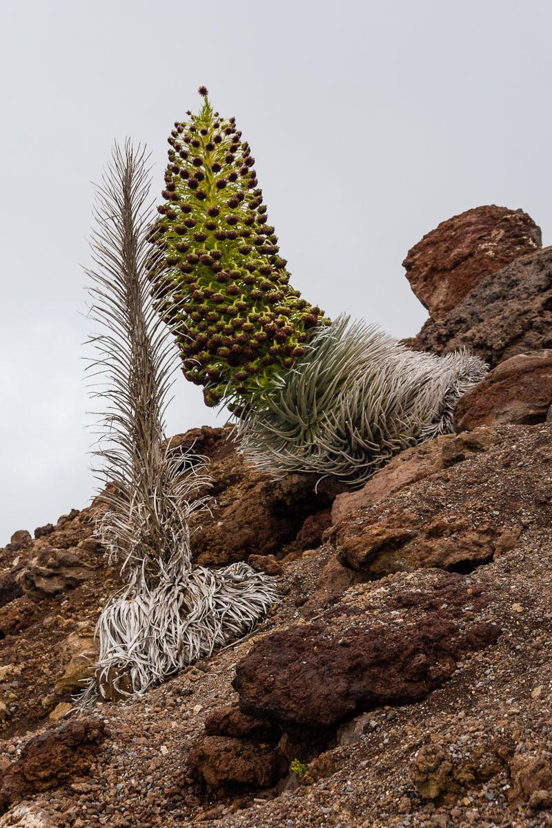 RCS-2007-08-25-Hawaii-Maui-Haleakala-Volcano-8413.jpg