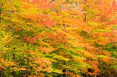 RCS-2012-10-05-Michigan-Upper-Peninsula--12-10-05_5D_2572.jpg