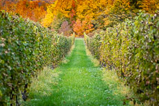 RCS-2018-10-26-Michigan-Traverse-City-Chateua-Grand-Traverse_5D4_16684.jpg