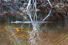 RCS-2015-04-13-Florida-Sanibel-Island-_5D_10206.jpg