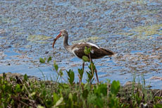 RCS-2015-04-16-Florida-Sanibel-Island-_5D_11045.jpg