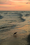 RCS-2015-04-16-Florida-Sanibel-Island-_5D_11216.jpg