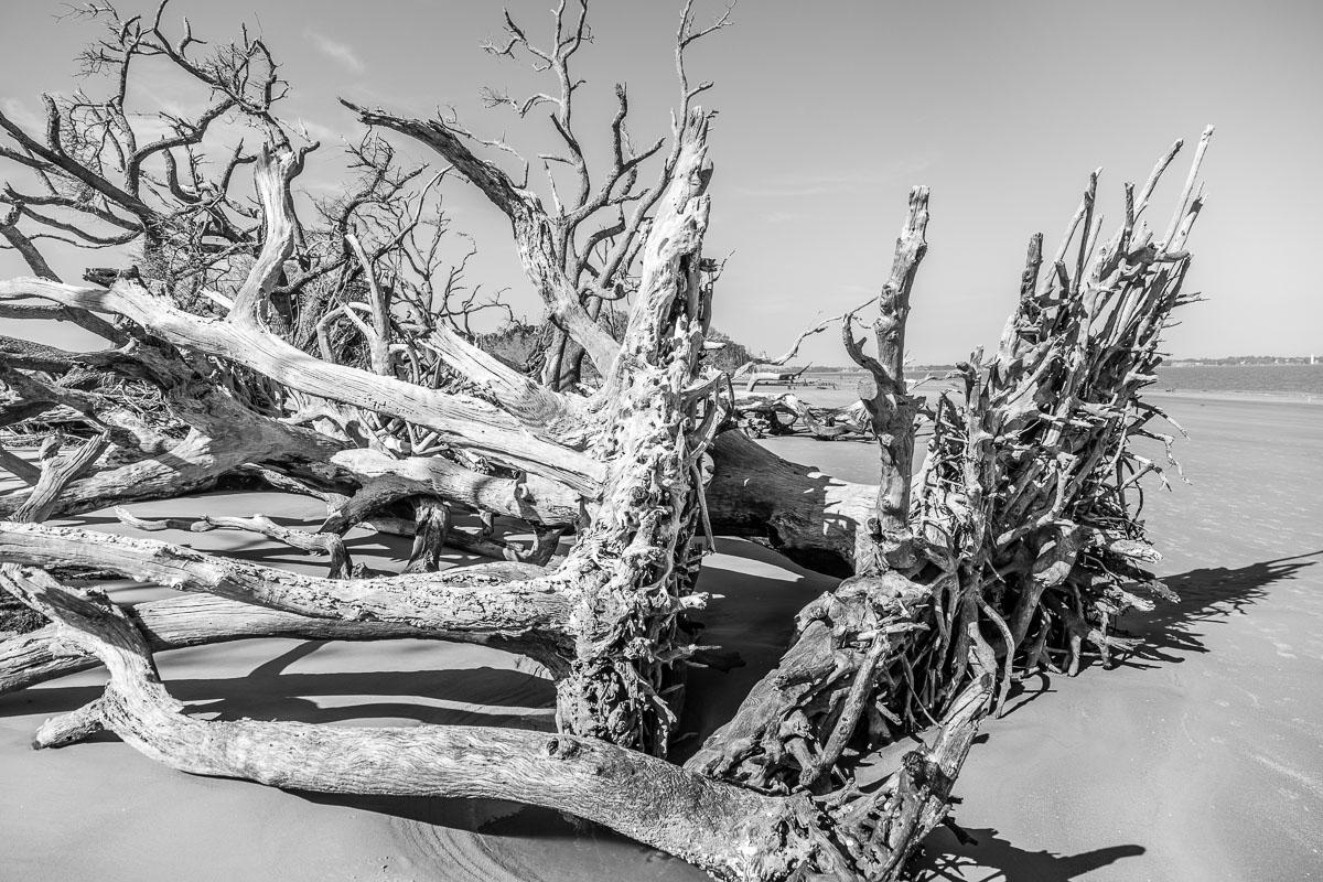 RCS-2019-02-05-Georgia-Jekyll-Island-Driftwood-Beach_5D4_17745.jpg
