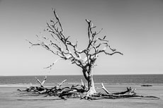 RCS-2019-02-05-Georgia-Jekyll-Island-Driftwood-Beach_5D4_17722.jpg