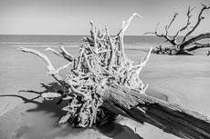 RCS-2019-02-05-Georgia-Jekyll-Island-Driftwood-Beach_5D4_17731.jpg