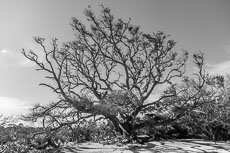 RCS-2019-02-05-Georgia-Jekyll-Island-Driftwood-Beach_5D4_17753.jpg